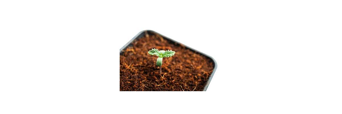 Pre growth