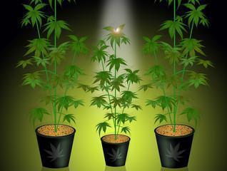 Vegetatieve groei