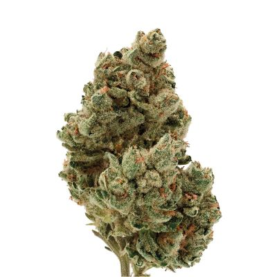 Frosty Gelato Autoflower